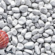 Seashell On White Pebbles Poster