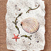Seashell With Pearls Sea Star And Seaweed  Poster