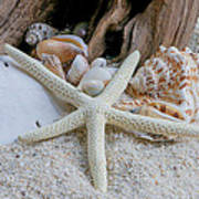 Seashells And Driftwood 2 Poster