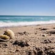 Seashells At The Shore Poster
