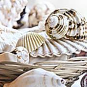 Seashells Poster by Elena Elisseeva