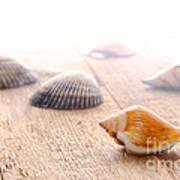 Seashells On Wood Dock Poster