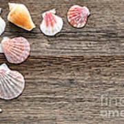 Seashells On Wood Poster