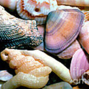 Seashells Puerto Rico Poster