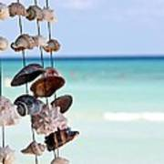 Seashells Poster by Sophie Vigneault