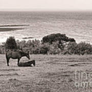 Seaside Horses Poster by Olivier Le Queinec
