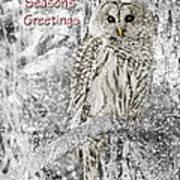 Season's Greetings Card Winter Barred Owl Poster