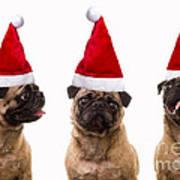 Seasons Greetings Christmas Caroling Pug Dogs Wearing Santa Claus Hats Poster