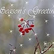 Seasons Greetings Red Berries Poster
