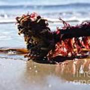 Seaweed 2 Poster