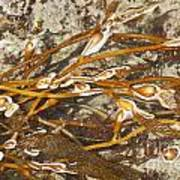 Seaweed Swirls Poster