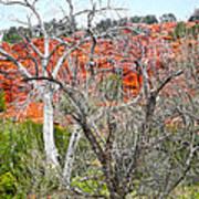 Sedona Arizona Dead Tree Poster