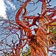 Sedona Arizona Ghost Tree Poster