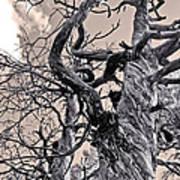 Sedona Arizona Ghost Tree In Black And White Poster