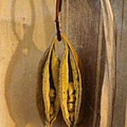 Seeds In Warm Coat Poster