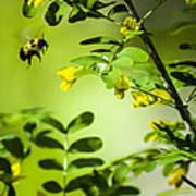 Seeking Nectar Poster