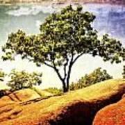 Sentinal Tree Poster