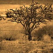 Sepia Cacti Roadside Poster