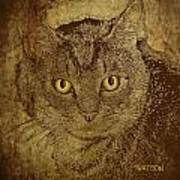 Sepia Cat Poster