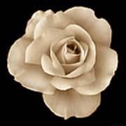Sepia Rose Flower Portrait Poster