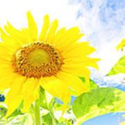 September Sun Poster