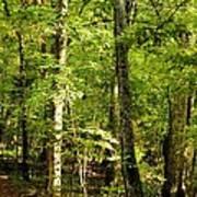 September's Woodlands Poster