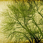 Serene Green 1 Poster by Wendy J St Christopher