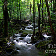Serene Greenbrier Area Stream  Poster