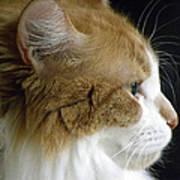 Serious Gato 2 Poster