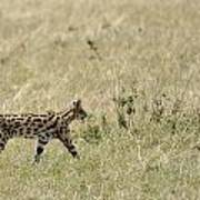 Serval Hunting Poster