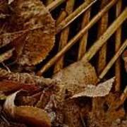 Settled Leaves  Poster