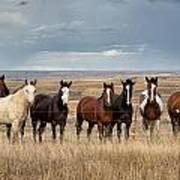 Seven Horses On The Range Poster