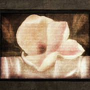 Shabby Vintage Magnolia Poster