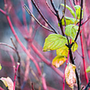 Shades Of Autumn - Reds And Greens Poster