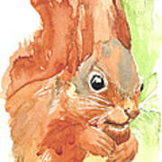 Shadow Tail Red Squirrel Poster