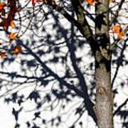 Shadows Of Fall Poster