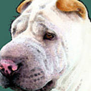 Shar Pei Art - Wrinkles Poster
