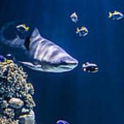 Shark Hunting Poster