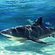 Shark In Depth Poster
