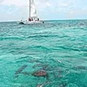 Shark N Sail I Poster