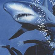 Sharkbait Poster