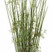 Sharp Grass Poster