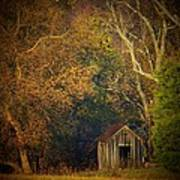 Shed And Trees Poster by Joyce Kimble Smith
