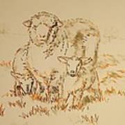 Sheep And Lambs Poster