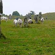 Sheep And Stones At Avebury Poster