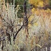 Sheep Creek Canyon Wyoming 11 Poster