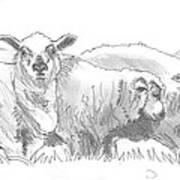 Sheep Drawing Poster