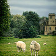 Sheep Grazing By Castle Poster