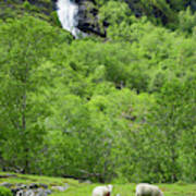 Sheep In A Grassy Mountain Field Poster