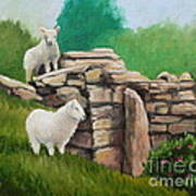 Sheep On A Rock Wall Poster